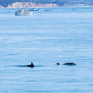 strearns_wharf_bait_and_tackle_dolphins